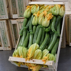 Zucchine fiore